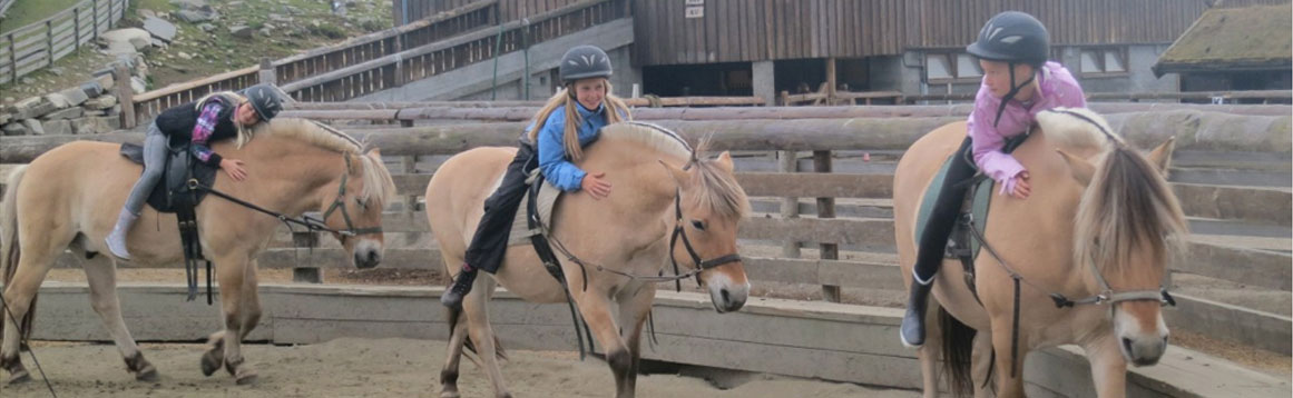 Riding on fjord ponies