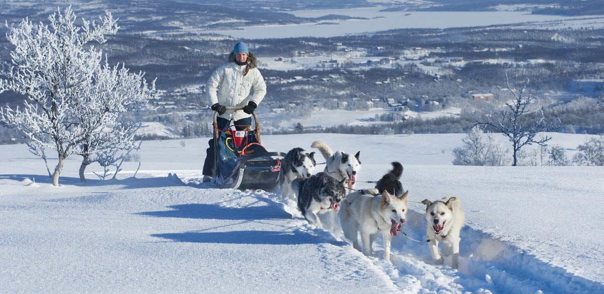 Dog sledding in Roros