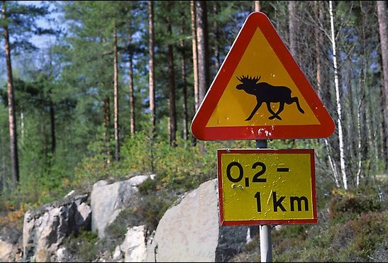 Moose crossing sign from Sweden