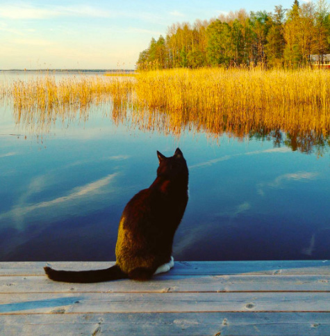 Cat on pier