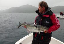 Fisherman fishing giant Norway haddock