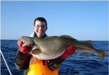 Scandinavian Cod – A Delicacy in February