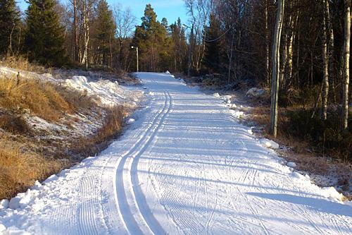 201113_Cross-country-skiing_Scandinavia