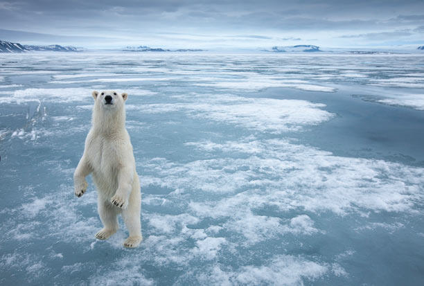 140715-polar-bear