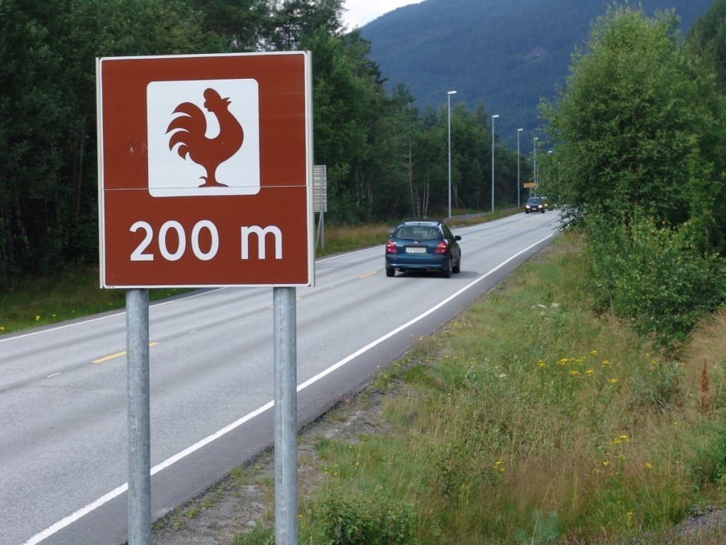 150715-Rooster-sign-300m