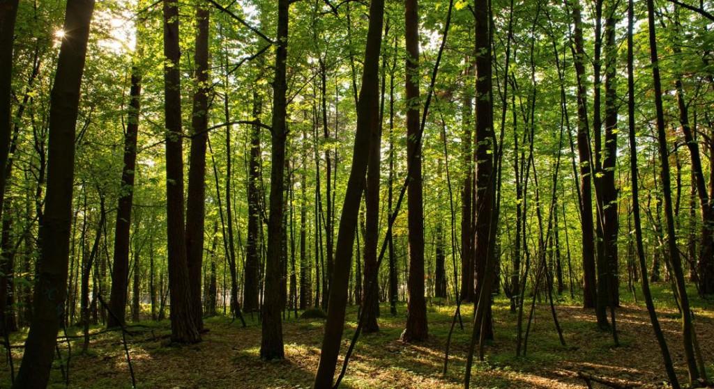Ekeberg Woods