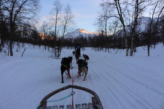 041015-lyngsfjord-adventure-tromsoe-dog-sleighing
