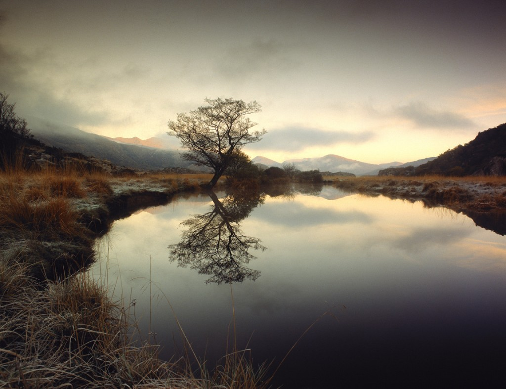 Tree Lake by Eoghan Kavanagh, Hasselblad 2012 winner