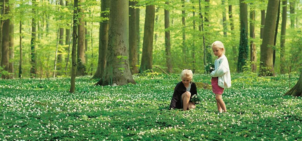 Springtime in Denmark