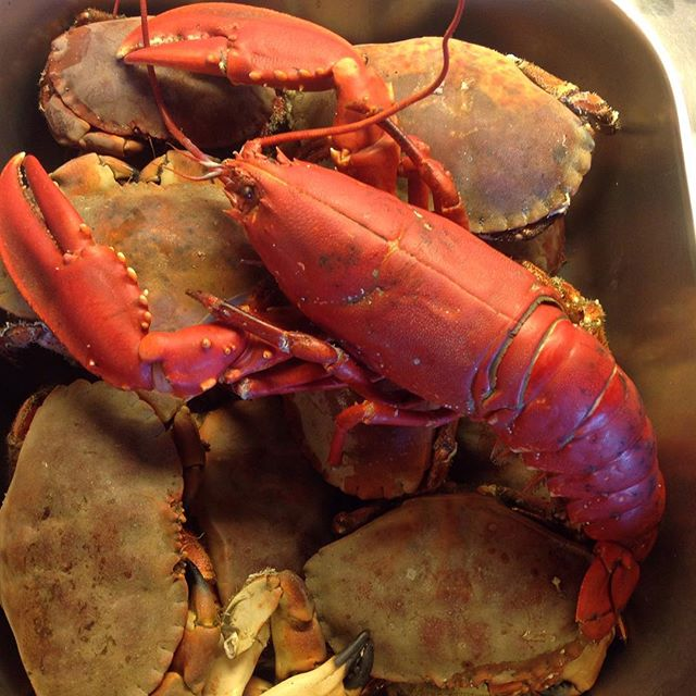 030516-lobster-crabs-in-vestfold-norway