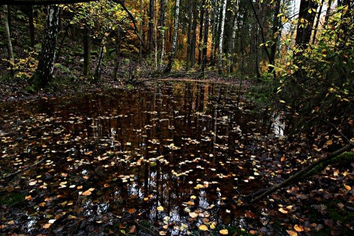 Salamander pond