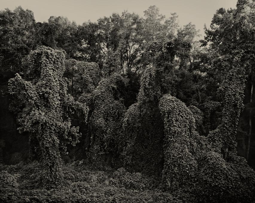 Southern Landscape by Helene Schmitz