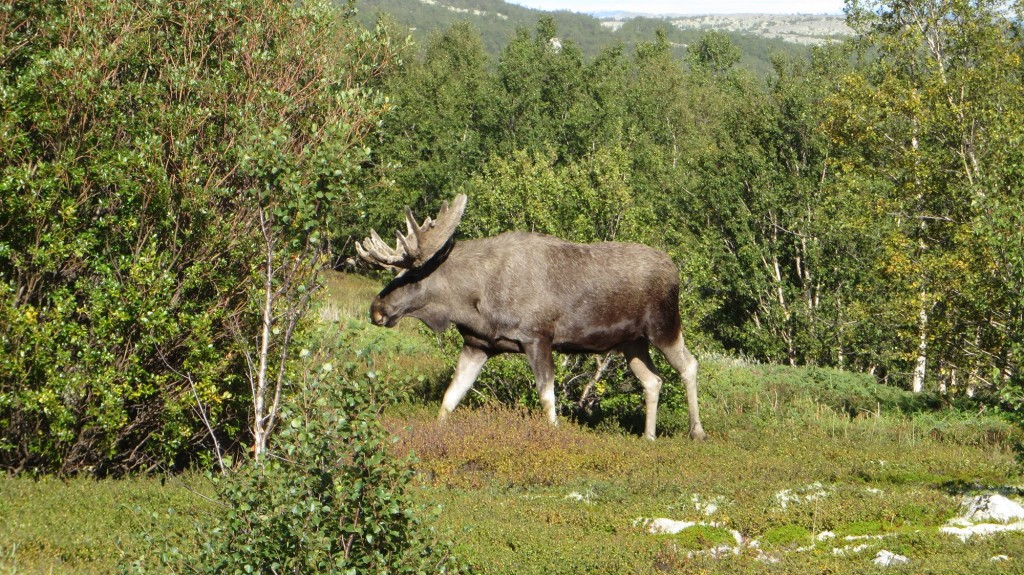 From Dovre national park