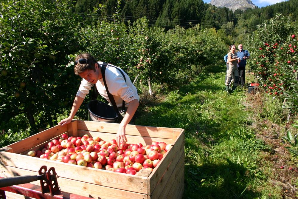 141016-hardanger-apples