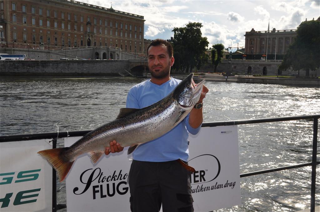 Fishing salmon in Strömmen river, Stockholm