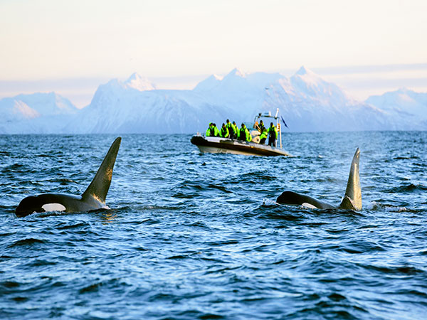 021116-whale-safari-norway
