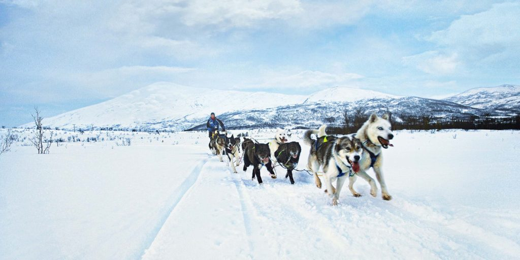 Dogsleighing. Photo: Hurtigruten