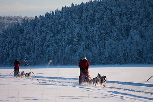 Dogsledding in Sweden. From our archives